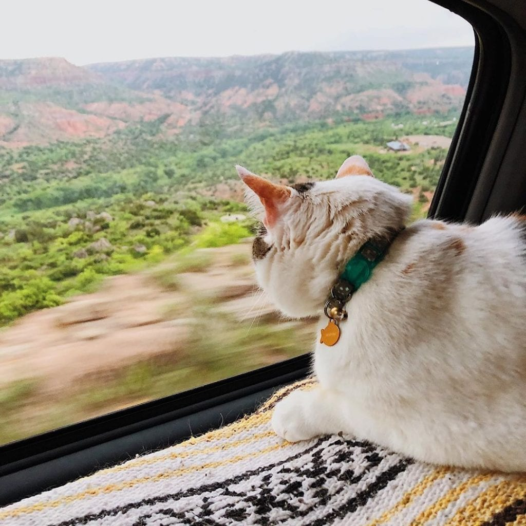 Wiley loves to watch the views pass by while driving in her motorhome.