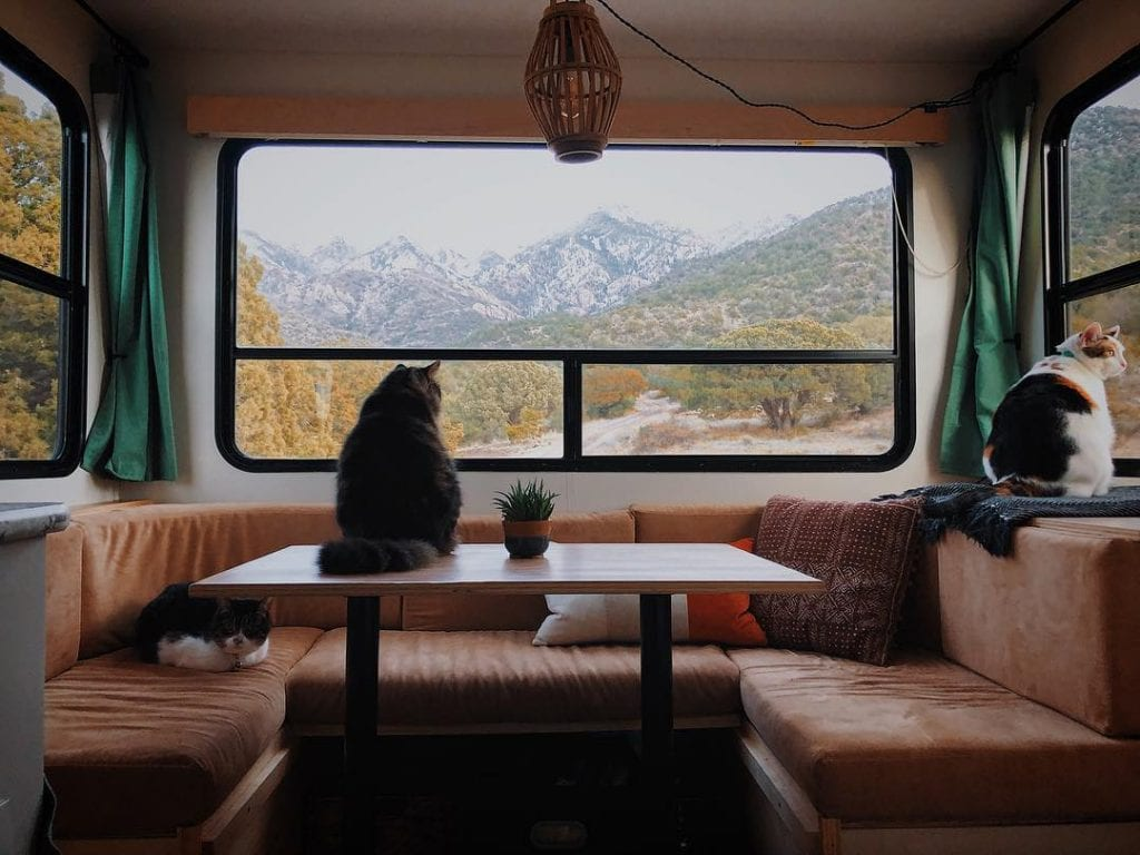 Cats love the expansive views offered by the large RV windows.