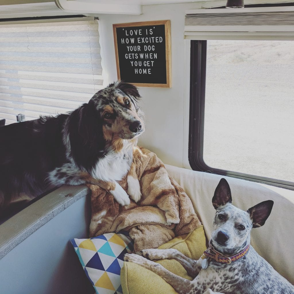 Many dogs enjoy the creature comforts of RV life as much as any human.