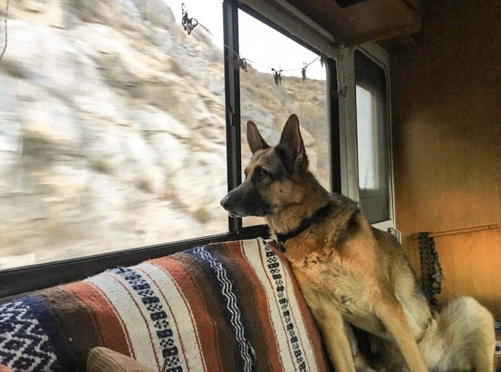 Many dogs enjoy watching hte sights pass by while traveling in an RV.