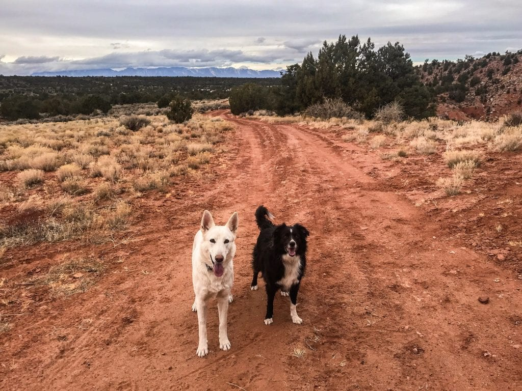 RVing with dogs in Zion National Park can be a ton of fun!