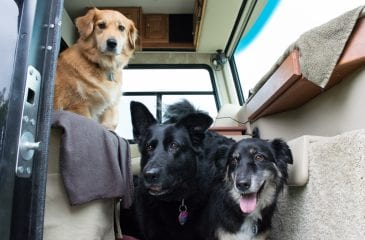 7 Tips for a Successful RV Trip with your Dog