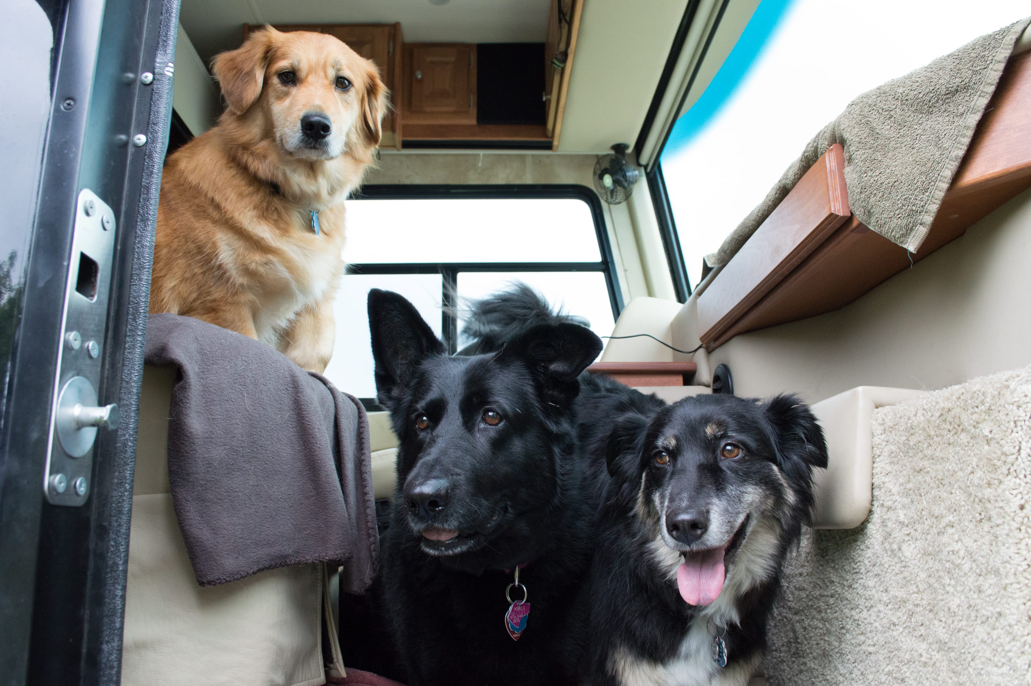 RVing is fun for the whole family, even the family pets!
