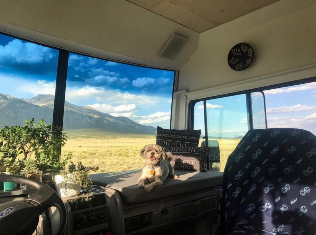 Many dogs enjoy the panoramic views that come along with RVing.