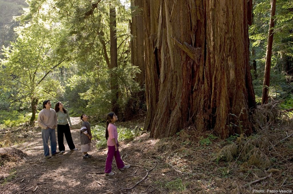 Bothe-Napa Valley State Park is a beautiful park in Northern California with a campground and access to hikeable trails., all minutes from Napa wineries