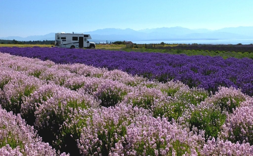With Harvest Hosts, members can park their RV in a field of lavender for free!