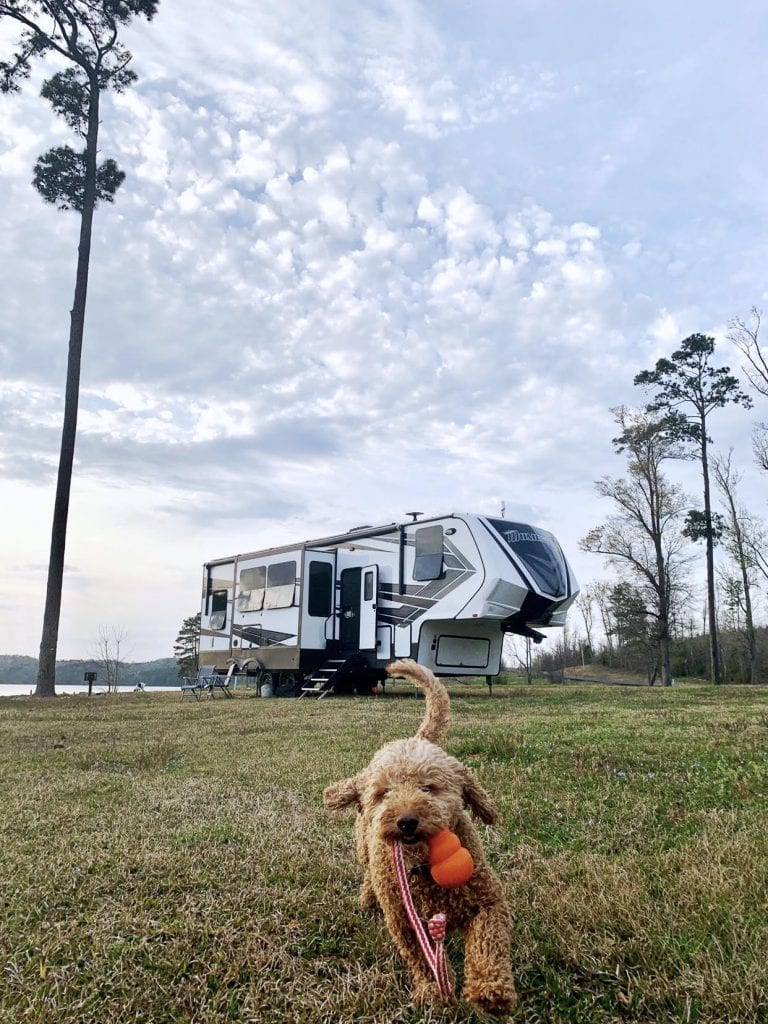 When RVing with your dogs, be sure to give them plenty of daily exercise!
