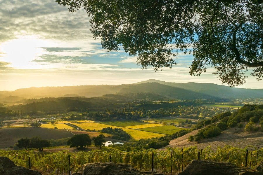 Vista of Sonoma Valley wine country in autumn. Looking down on patches of yellow and green vines. Sun rays shine over mountains and valleys, tree in foreground.