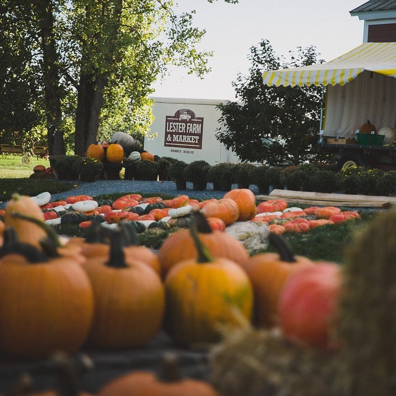 Vermont's Lester Famr s the perfect place for your fall family fun.