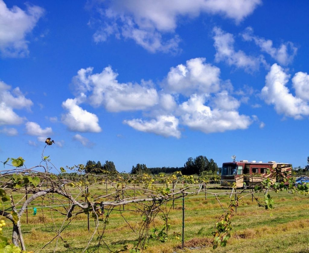 Summer Crush Winery is a Harvest Hosts favorite in sunny Florida.