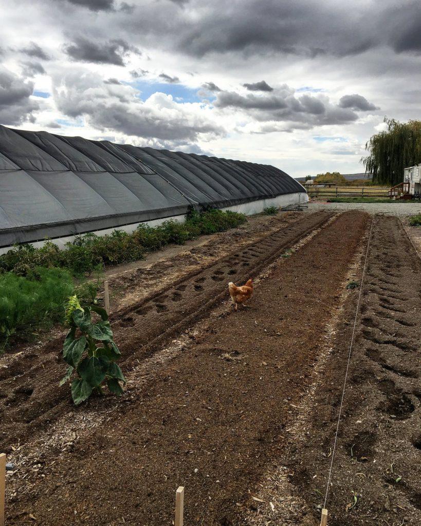 Kraay's Market & Garden is a beautiful farm in Bellevue, Idaho.