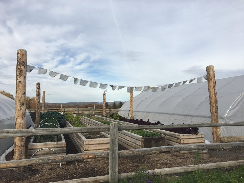 Kraay's Market & Garden is a farm with raised beds and a couple of greenhouses for year-round farm fresh produce.