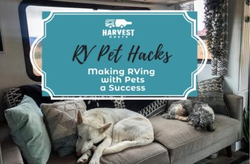 RV Pet Hacks