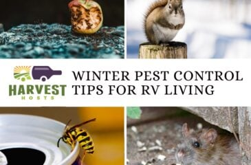 Winter Pest Control Tips for RV Living