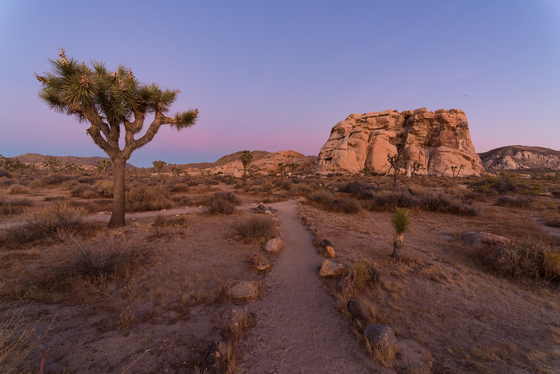 Joshua Tree is one of the quirkiest national pakrs in the US.