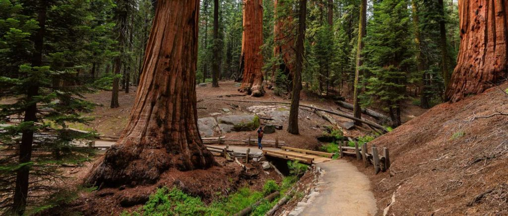 Sequoia National Park is the perfect RV destination.