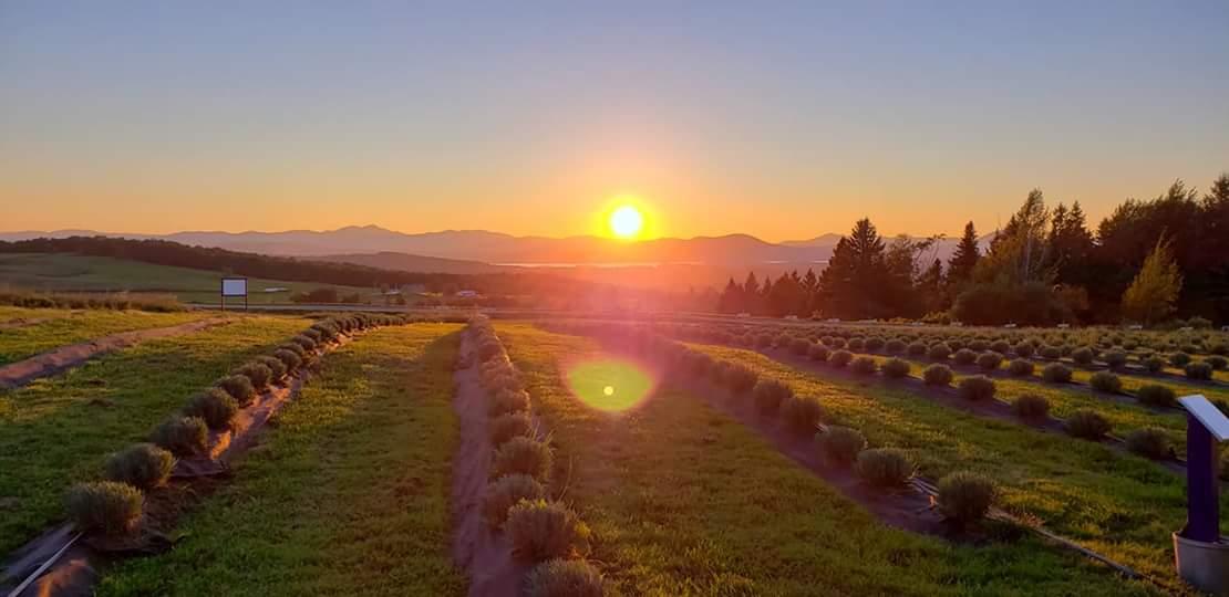 Lavender Essentials of Vermont