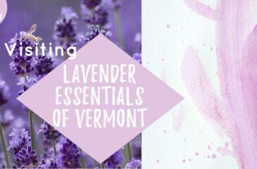 Visiting Lavender Essentials of Vermont