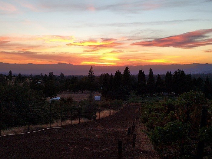 Indian Peak Vineyards typically has beautiful sunsets every night.