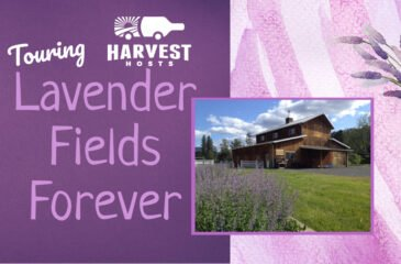 Touring Lavender Fields Forever