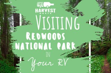Visiting Redwoods National Park in your RV