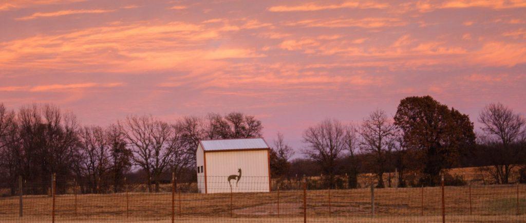 Zena Suri Alpacas is located in Northeastern Oklahoma.