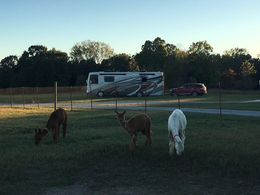 Zena Suri Alpacas joined the Harvest Hosts family a few years ago.