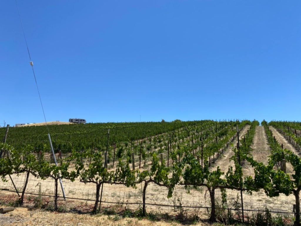 There are seven acres of grapevines planted,