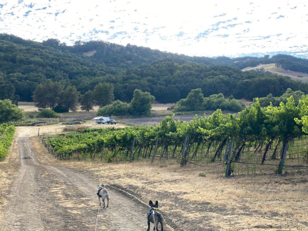 It now is an operational vineyard with a winery and tasting room.