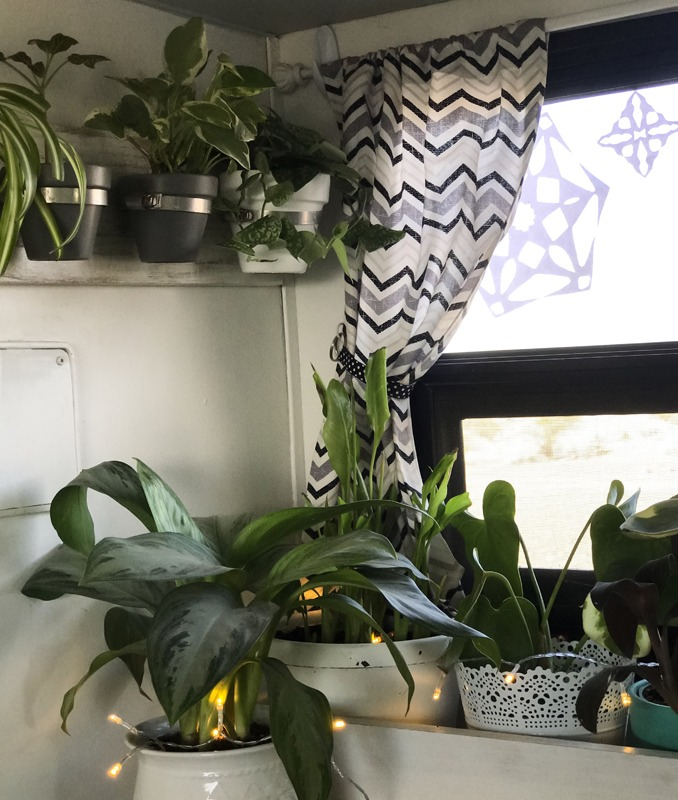 Utilizing vertical and wall space is key for your plants.