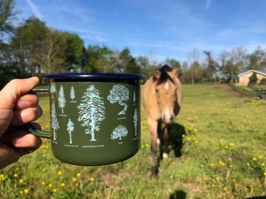 A pony walks towards a pretty coffee mug being held up towards the sky.