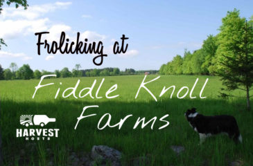 Frolicking at Fiddle Knoll Farm