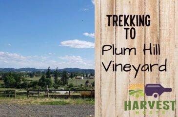 Trekking to Plum Hill Vineyards