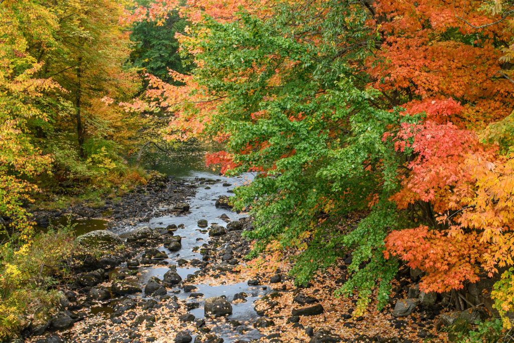 A creek runs through a forest of trees, decorated in a variety of fall colors.