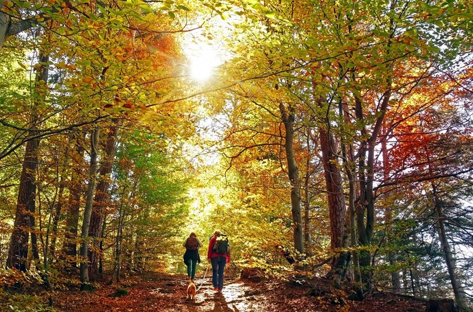 Two people hike through a forest full of beautiful fall foliage as light dapples gently between the trees.