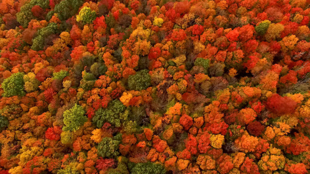A sea of deciduous trees decked out in autumnal colors of red, gold, brown, and orange.