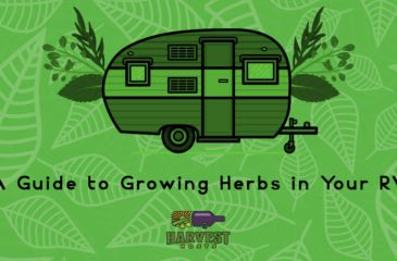 A Quick & Easy Guide to Growing Herbs in Your RV