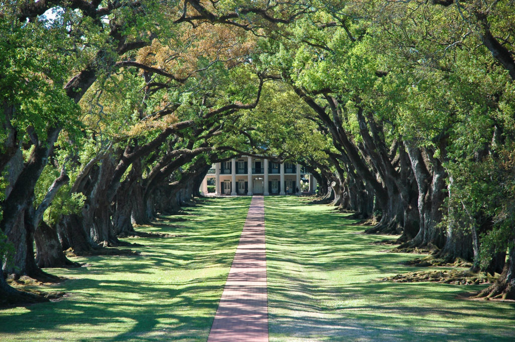 A stunning tree-lined walkway leads to a gorgeous southern-style home.