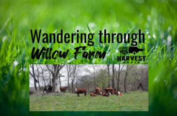 Wandering through Willow Farm