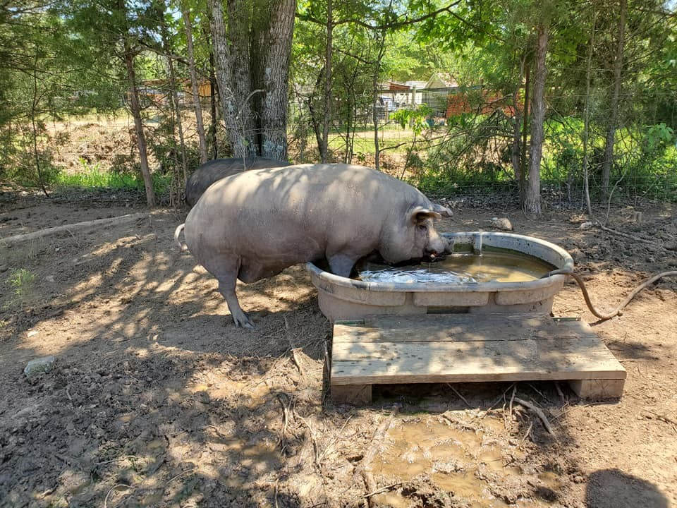 Animal Sanctuary in South Carolina is an excellent Harvest Hosts location.