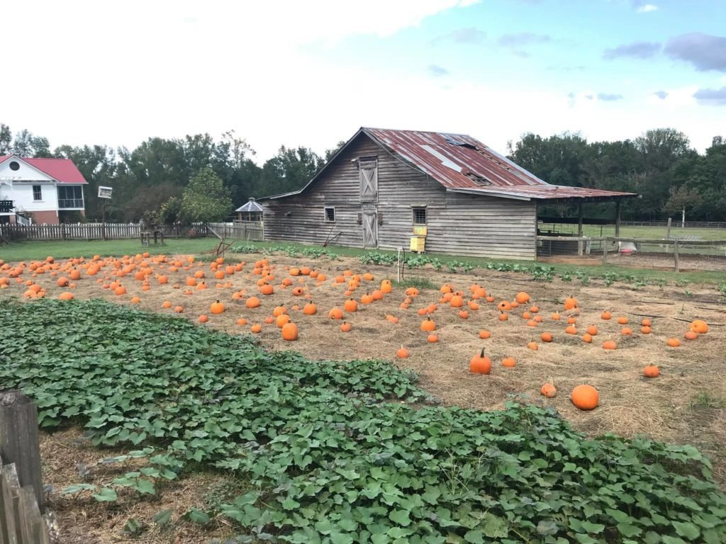 Old McCaskill's Farm in South Carolina is an excellent Harvest Hosts location.