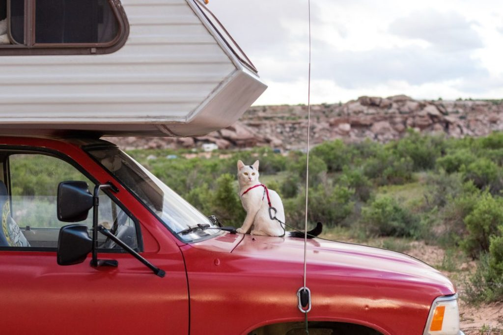 RVing with a cat can be fun but requires plenty of upfront practice and preparation.