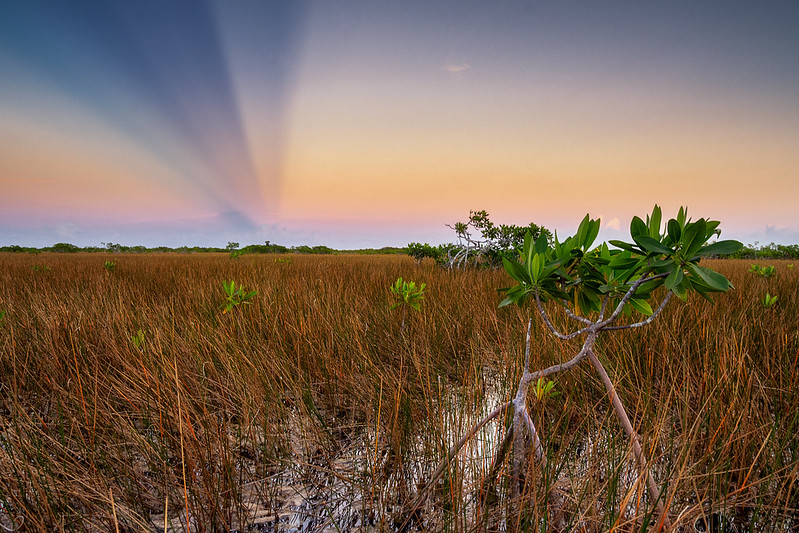 Everglades NP boasts a thriving plant and animal ecosystem that cannot be found anywhere else in the world.
