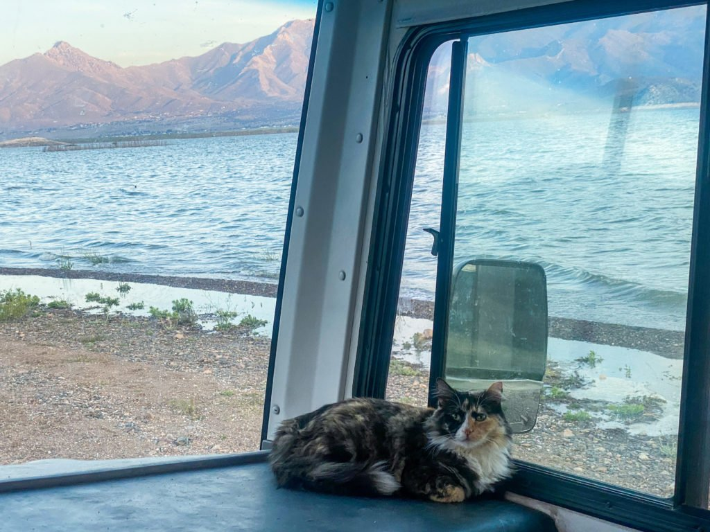Cats tend to enjoy the views and freedom of RV life just as much as a dog.