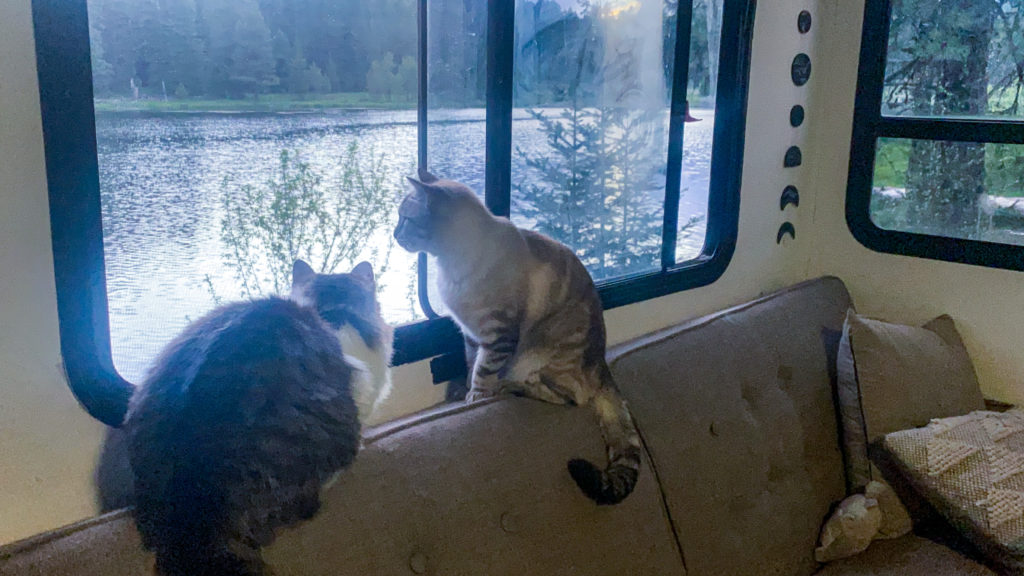 Just like a dog, your feline friend is more than capable of enjoying RV life, with the right practice and accommodations, of course.