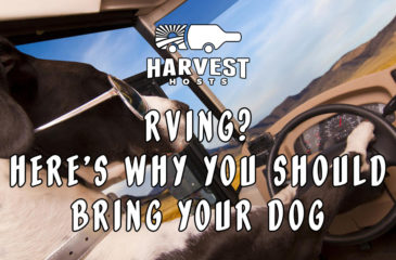 Rving? Here's Why You Should Bring Your Dog