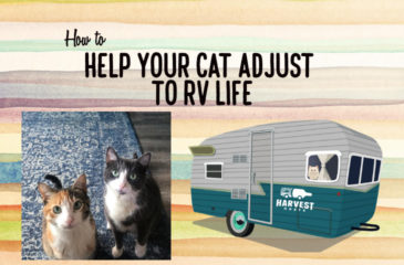 How to Help your Cat Adjust to RV Life