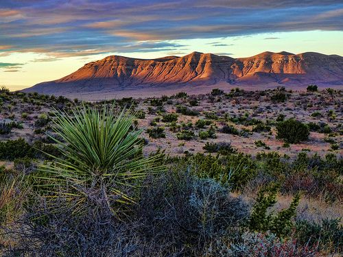 a sunrise view of desert buttes and lush greenery
