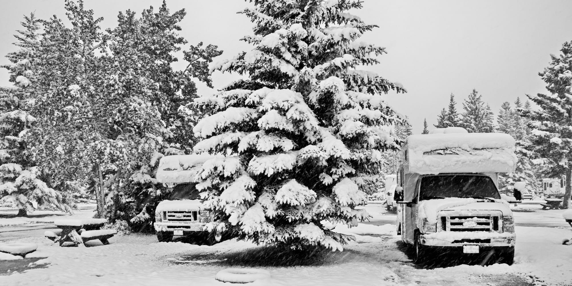 Snowy scenery with two rvs parked next to a snow-covered pine tree