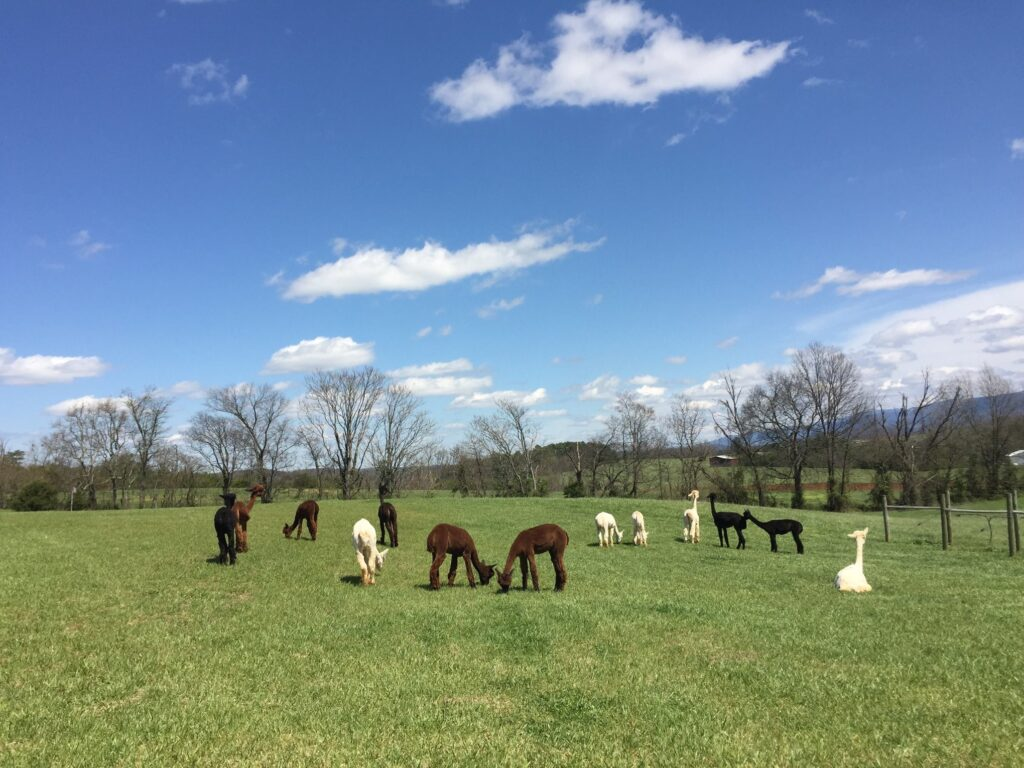 Two Roots Alpacas is an excellent example of a Tennessee Harvest Hosts location.